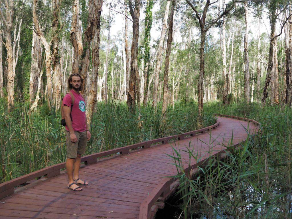 Dřevěná stezka Myola Court, chráněná oblast Coombabah Lakelands, Gold Coast, 2020.