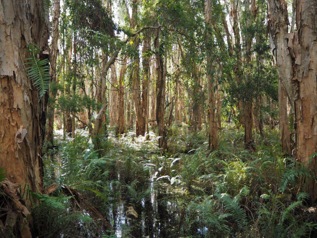 Chráněná oblast Coombabah Lakelands, Gold Coast, 2020.