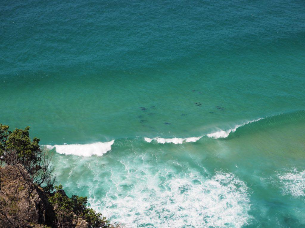 Delfíni ve vlnách, Byron Bay, 2020