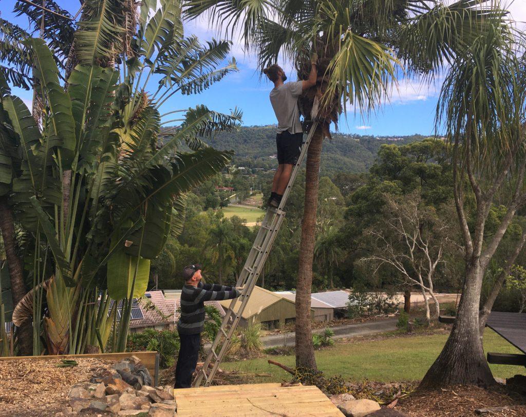 Zahradničení, Worongary, Gold Coast, 2020