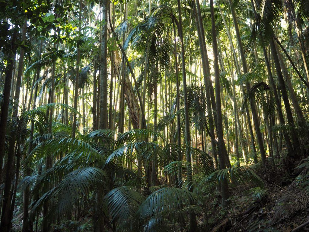 Tamborine National Park, 2020